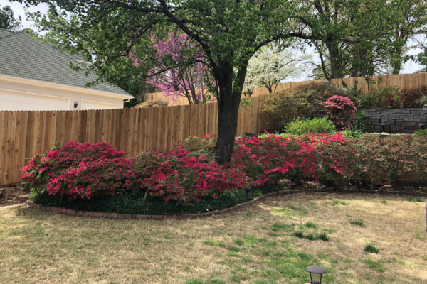 Privacy with Landscaping